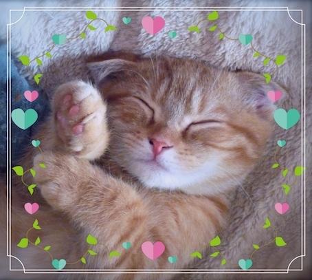子猫招き.jpg