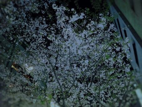 桜_Fotor.jpg